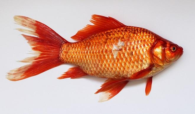 Izlazi puno ribe u moru